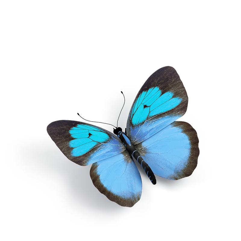 Single Butterfly - Feathered.png