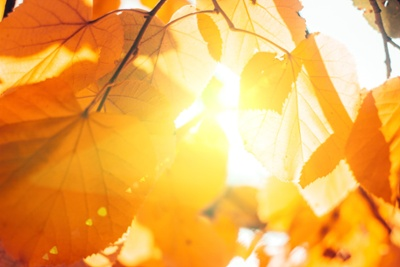 Fall Leaves - Small