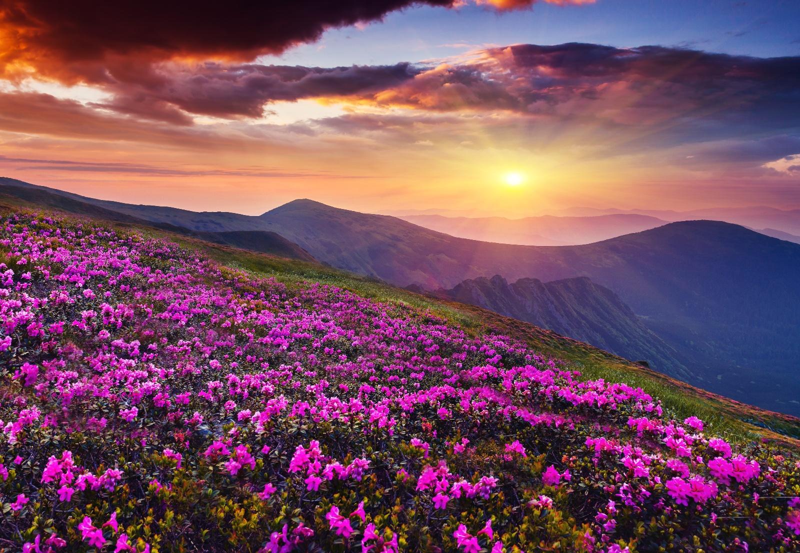 Spring Equinox 2021 Meditaion