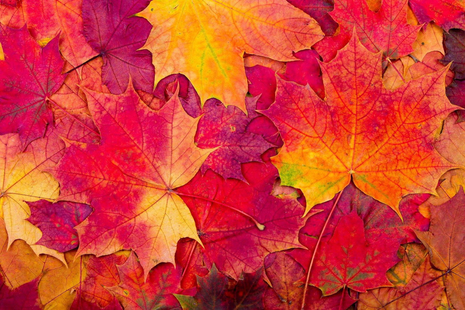 Oct19 Hero Image 1600px