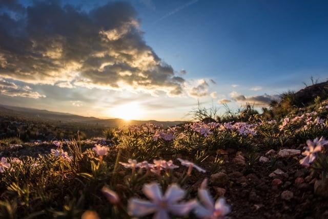 flower-sun.jpg