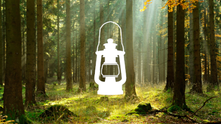 lantern-forest-small-450.png