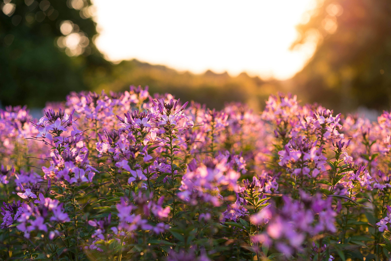 purple_flowers.jpg