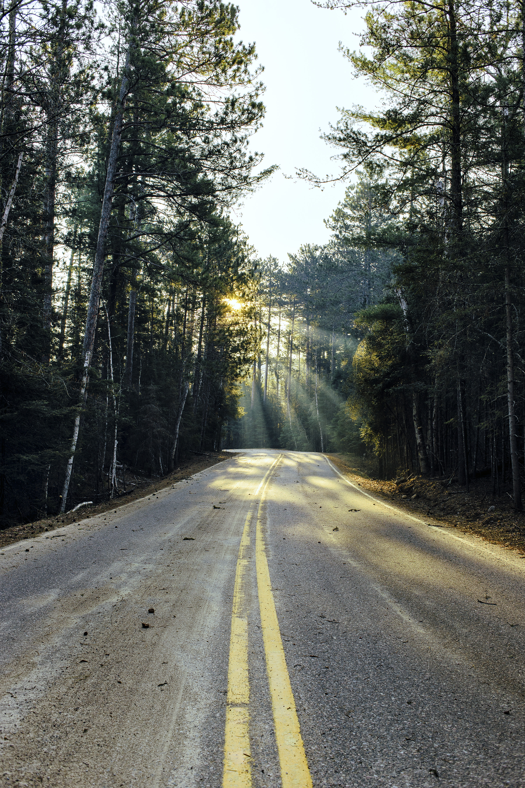 sun-path-trees.jpg