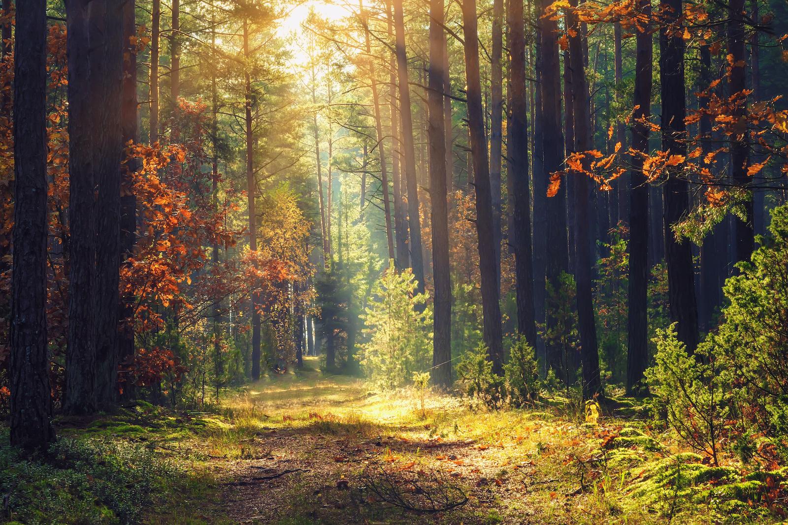 Balancing Dark and Light - An Autmn Equinox Meditation