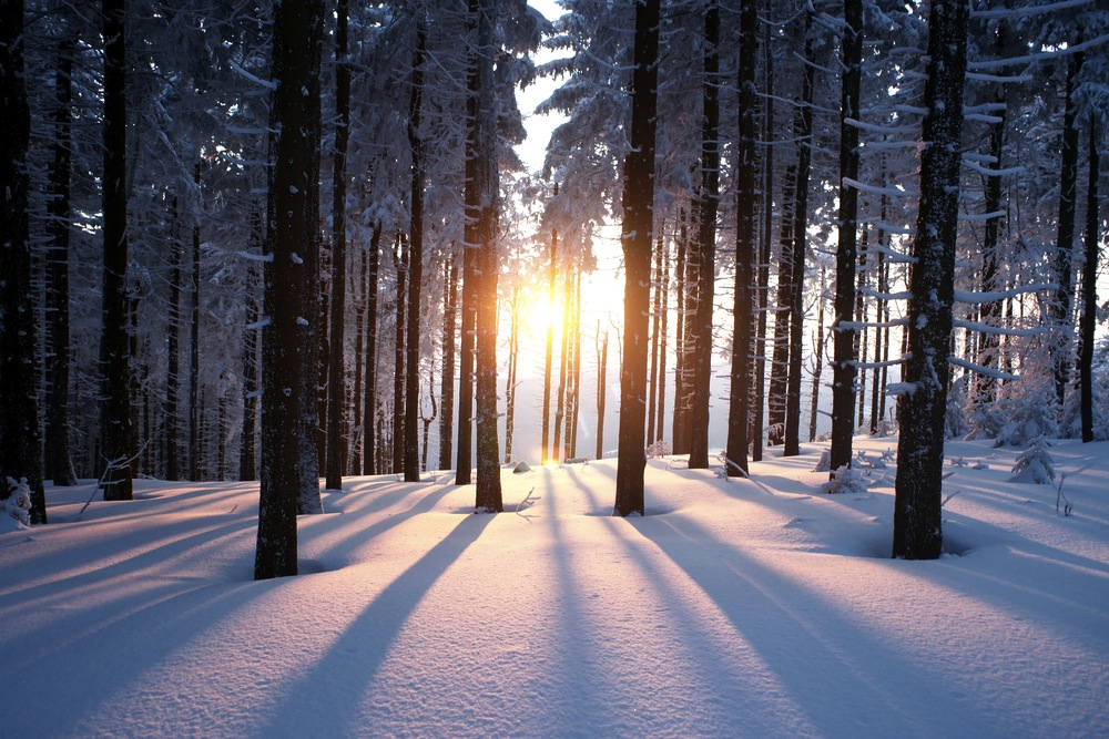 Winter Solstice: From Darkness to Light