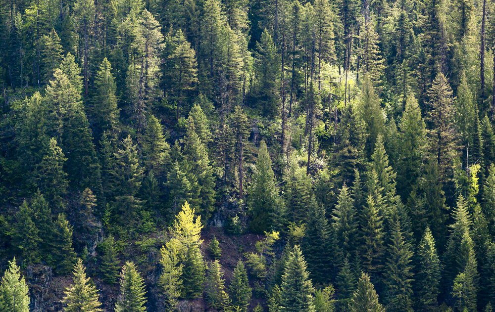 Your Fundraising Strategy: Seeing The Forest For The Trees